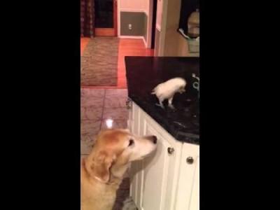 Vogel füttert Hund mit Nudeln