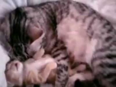 Süßes Katzen-Baby wird getröstet