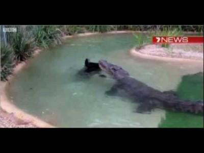 Krokodil kämpft um Rasenmäher