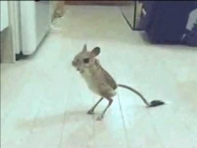 Krasse unheimliche dämonische Monster-Maus
