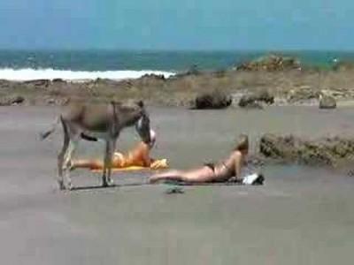 Geiler Esel bekommt wegen sexy Frau großen Ständer