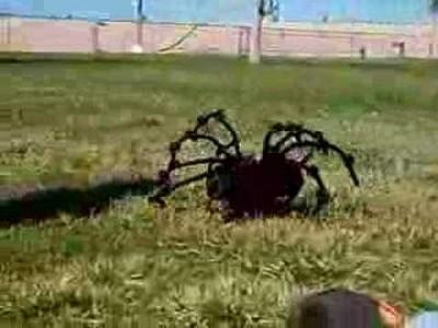 Die größte, gefährlichste und tödlichste Spinne der Welt