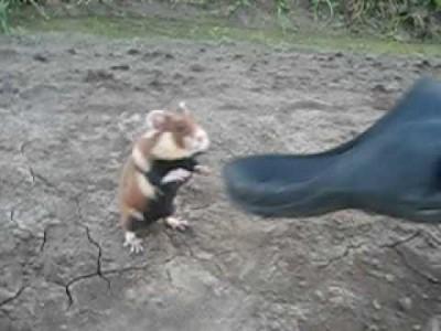 Extrem böser Hamster kämpft gegen 2 blöde Russen