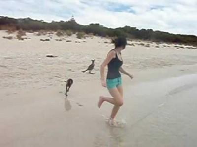 Süßes Baby Känguru geht schwimmen im Meer