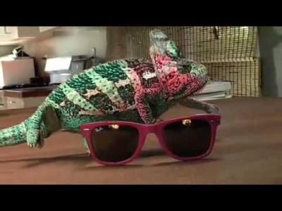 Super Chamäleon wechselt extrem schnell Farbe