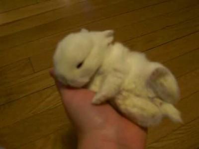 So Niedlich! Süßes Kaninchen Baby schläft in Hand ein